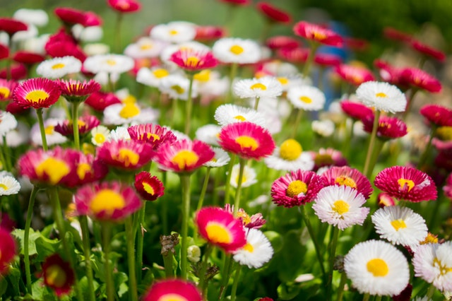 Plant Now For Spring Beauty