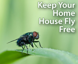Keep your home house-fly free