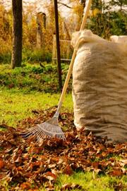 November gardening list